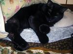 cat20080301_004.jpg
