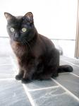 cat DSCN0076.jpg