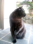 cat DSCN0081.jpg