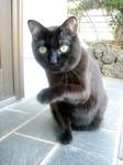 cat DSCN0083.jpg