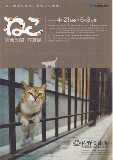 cat_iwago_01.jpg