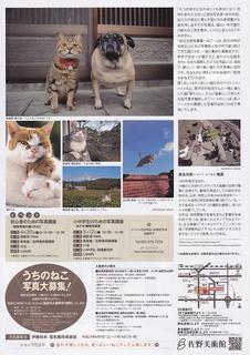 cat_iwago_02.jpg