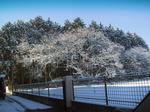 snowIMG_0005.jpg